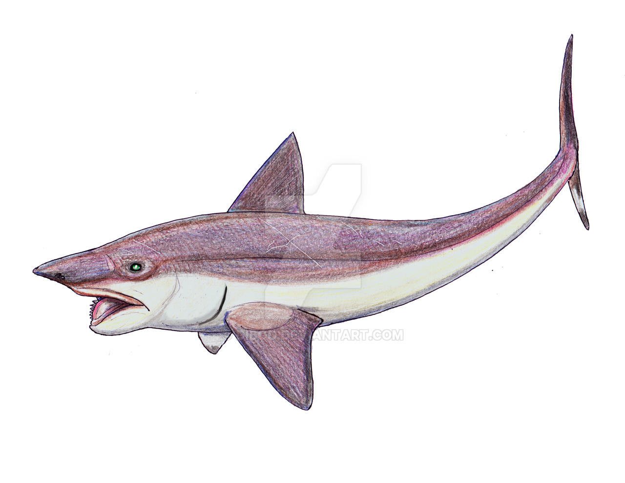 Helicoprion as chimeroid by DiBgd