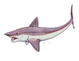 Helicoprion as chimeroid