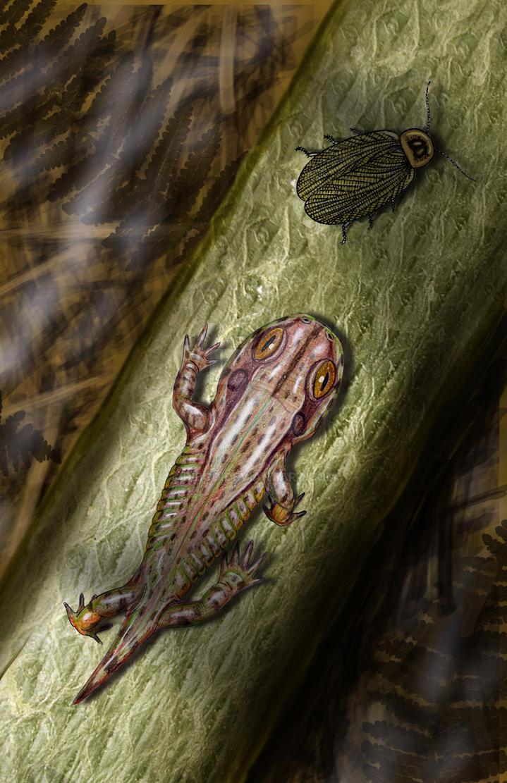 Amphibamus grandiceps by DiBgd