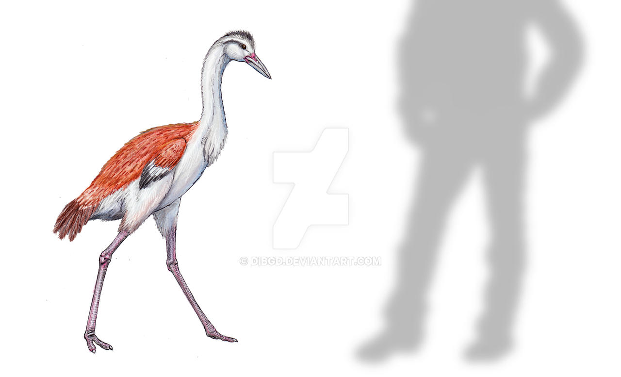 Ergilornis by DiBgd
