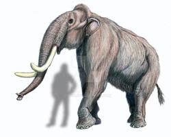 Mammoth from Ust Tarka