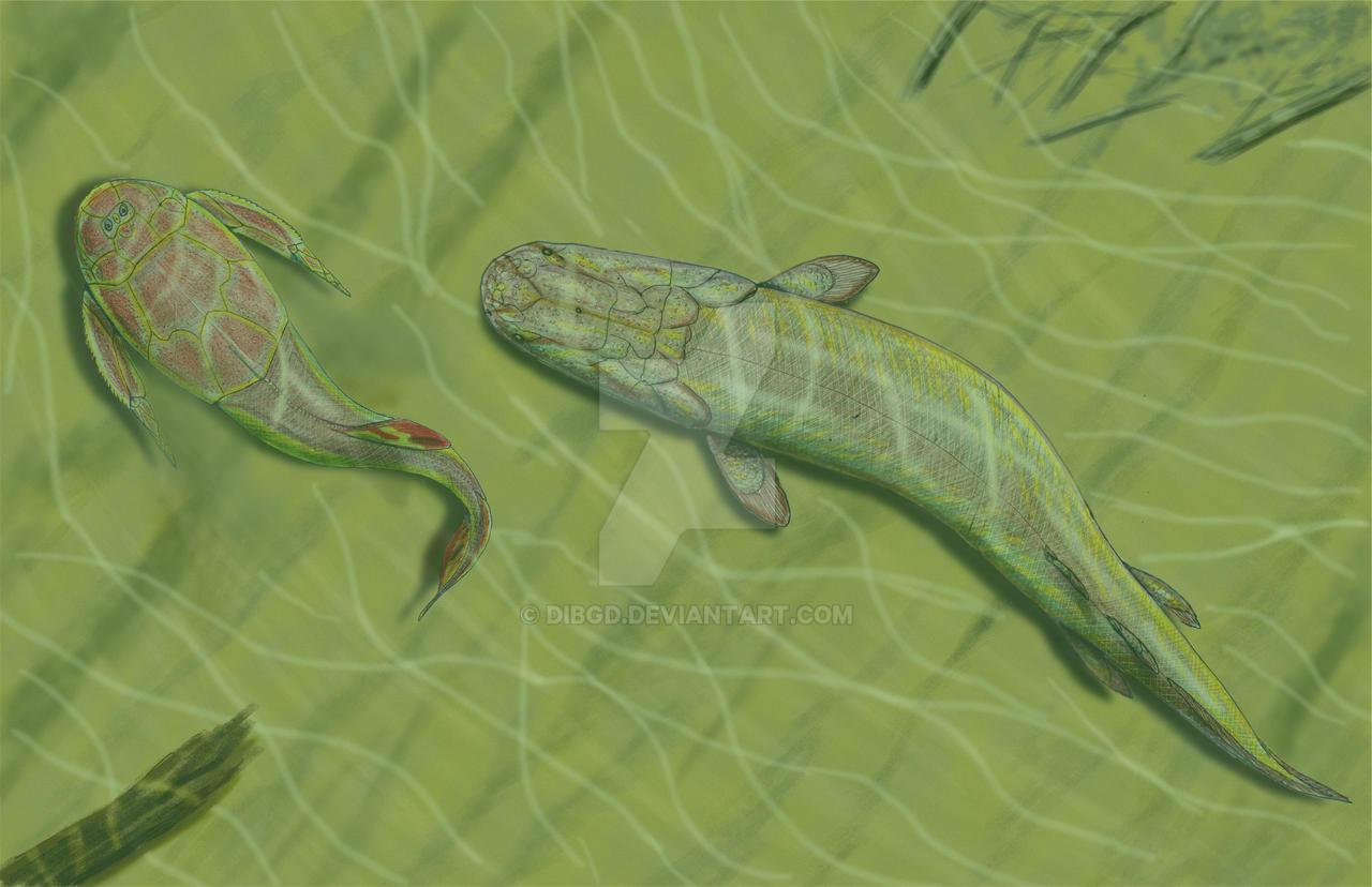 Platycephalichthys by DiBgd