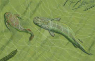 Platycephalichthys