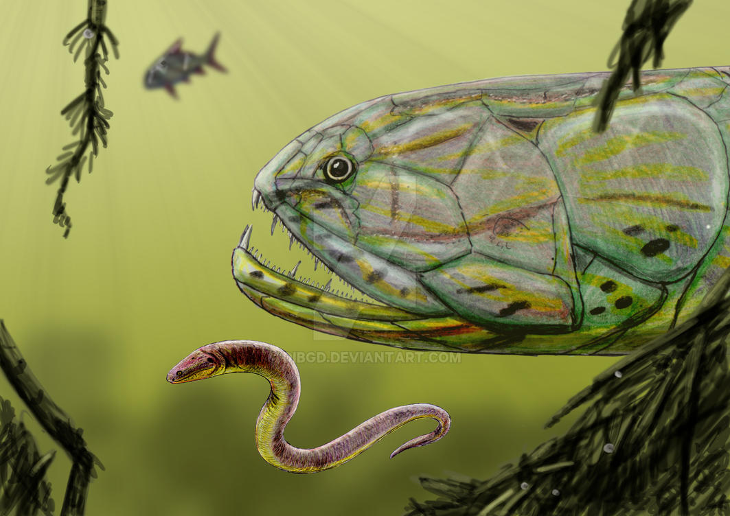 Screbinodus ornatus by DiBgd