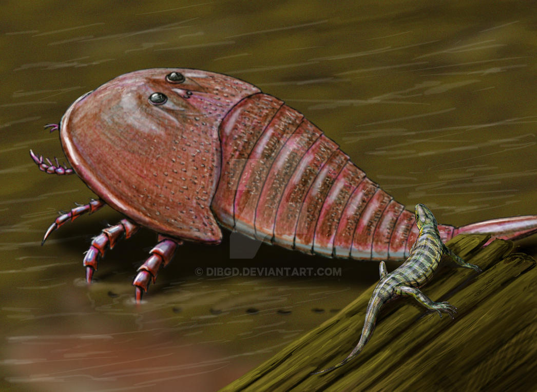 Hibbertopterus and Casineria by DiBgd