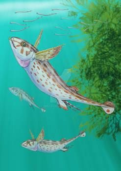 Sibyrhynchus