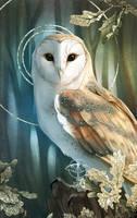 December Owl