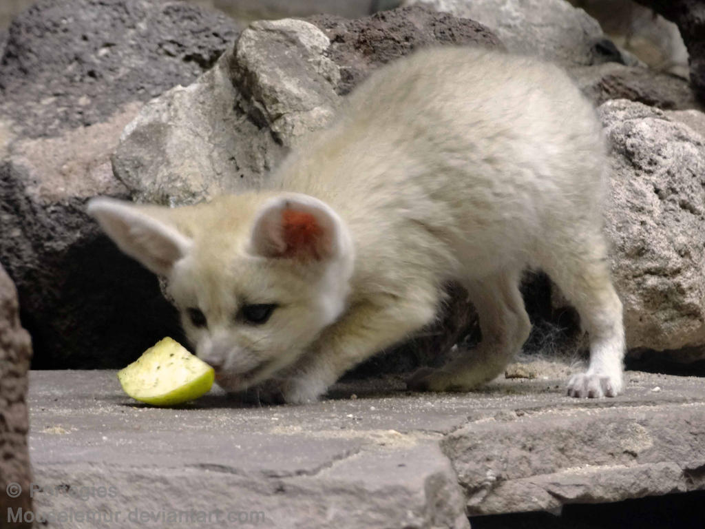 Peeling an Apple by Mouselemur