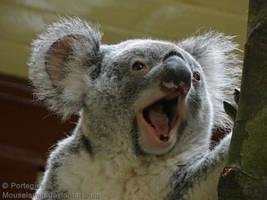 Eucalyptus Lover by Mouselemur