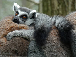 Goodnight Lemur by Mouselemur