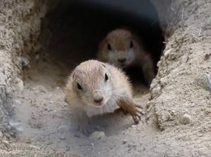 Where O Where Is Love by Mouselemur
