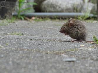 Quiet Moments by Mouselemur