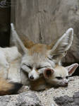 I'm Not a Pillow, Mom by Mouselemur