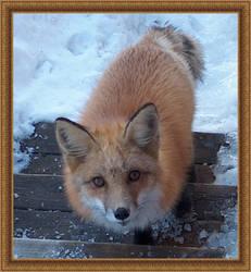 Fox 4 by gothika248