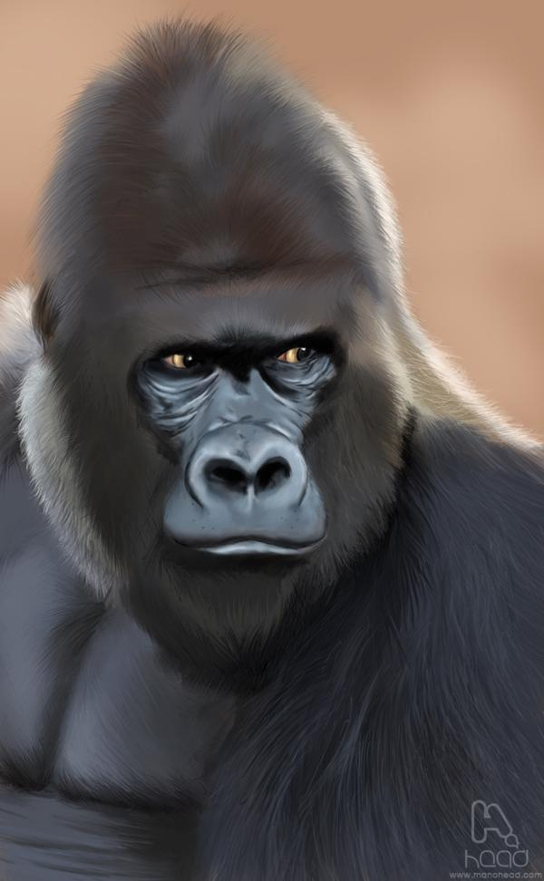 GoriLLa by manohead