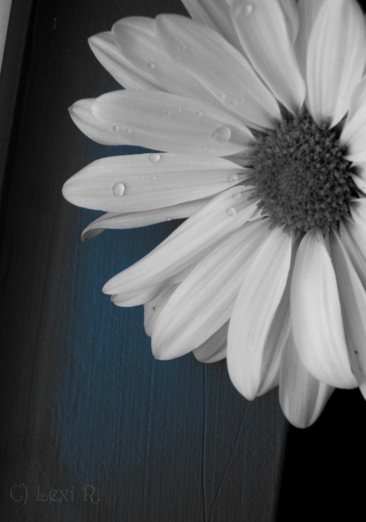 Blue Daisy by XmoonlitXtreasureX