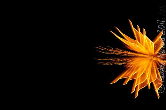 Firework Series by lordmagnusvo