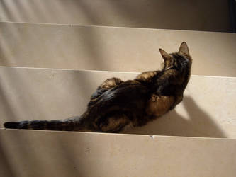 Cat on stairs 2 by TinyWild