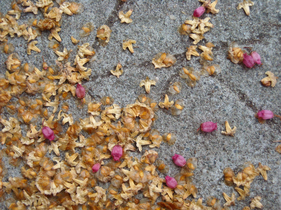 Confetti of Autumn by TinyWild