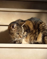 Cat on stairs 3