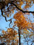 Orange leaves in the sky