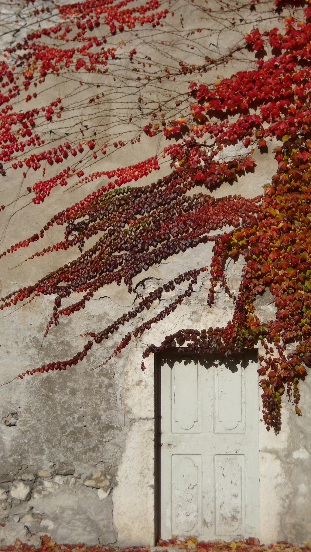 The door to Autumn by TinyWild