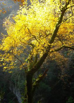 Magical tree in yellow