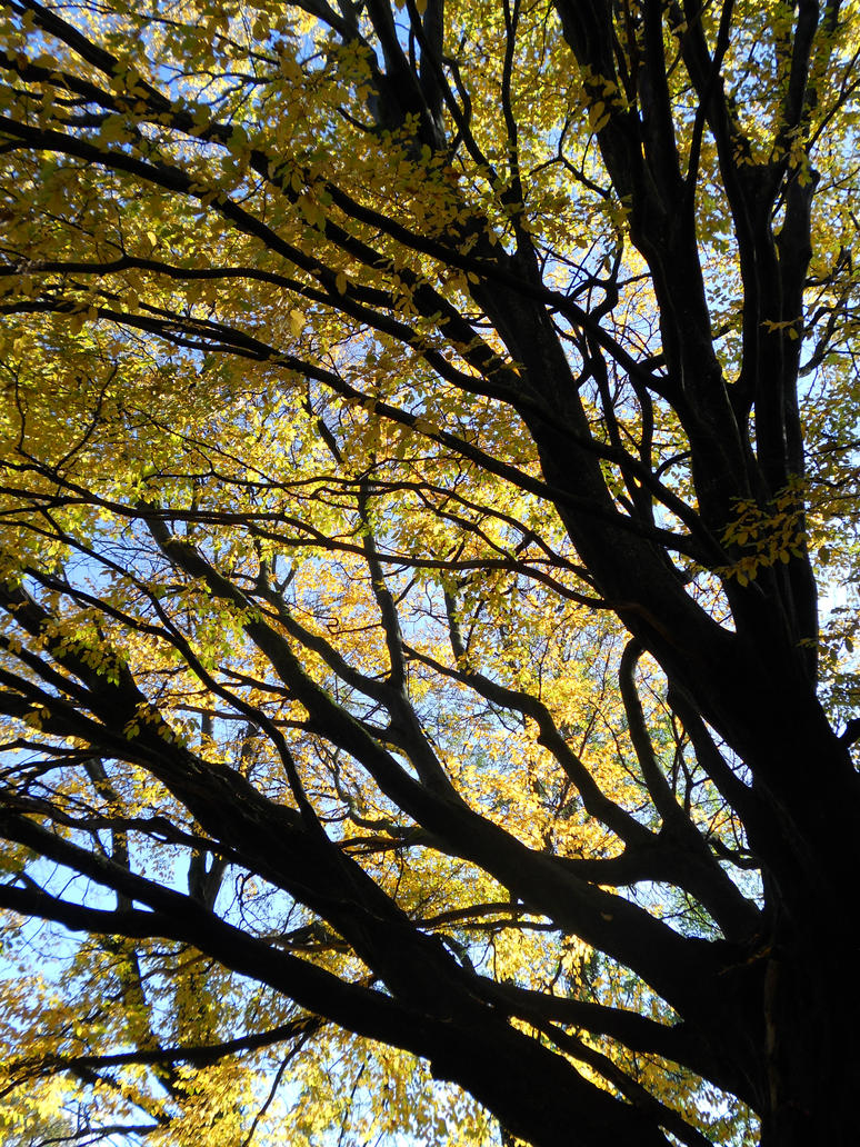Dark Branches Yellow Leaves by TinyWild