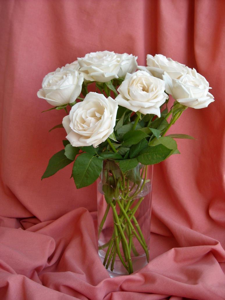 Un bouquet de roses blanches by TinyWild