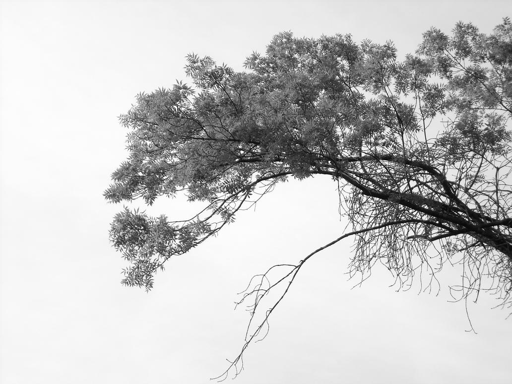 The highest branches by TinyWild