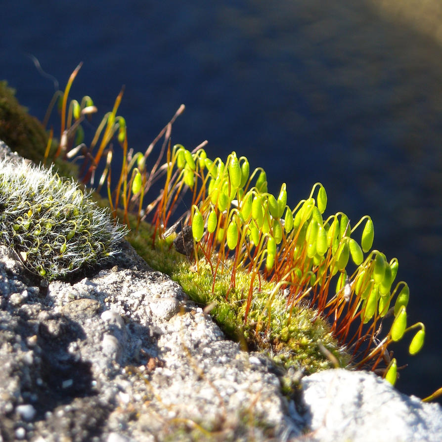 Crazy about Moss by TinyWild