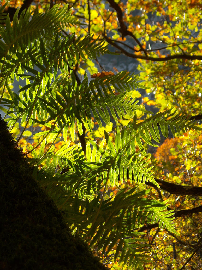 Ferns in November by TinyWild