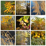 One day in my daily life - 201113 - Autumn