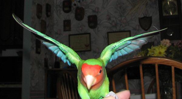 Wings 1 by AcornahStock