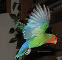 Wings 4 by AcornahStock