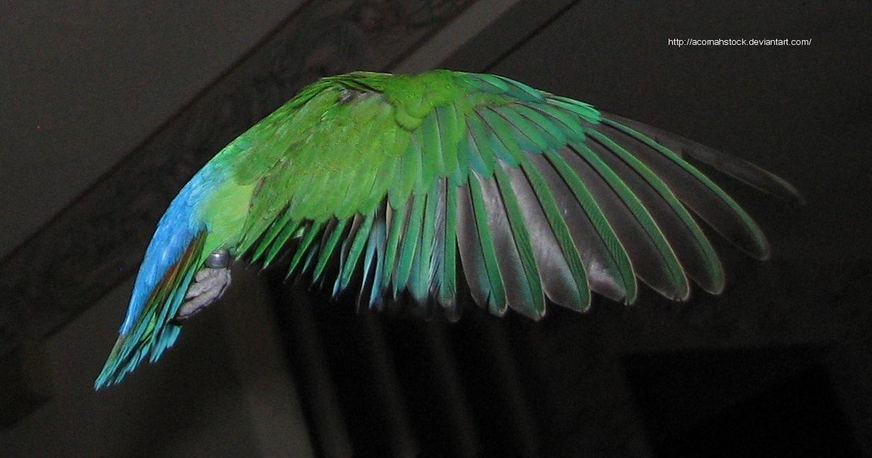 Wings 5 by AcornahStock