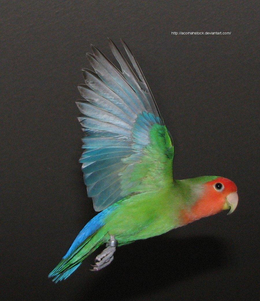 Wings 6 by AcornahStock