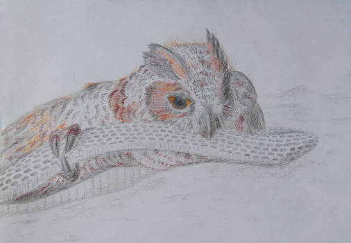 Great horned owl and a snake