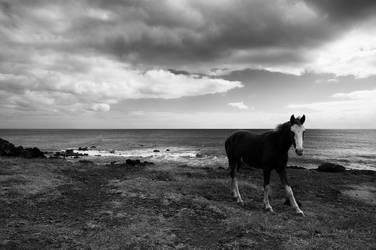 Easter Island Horse