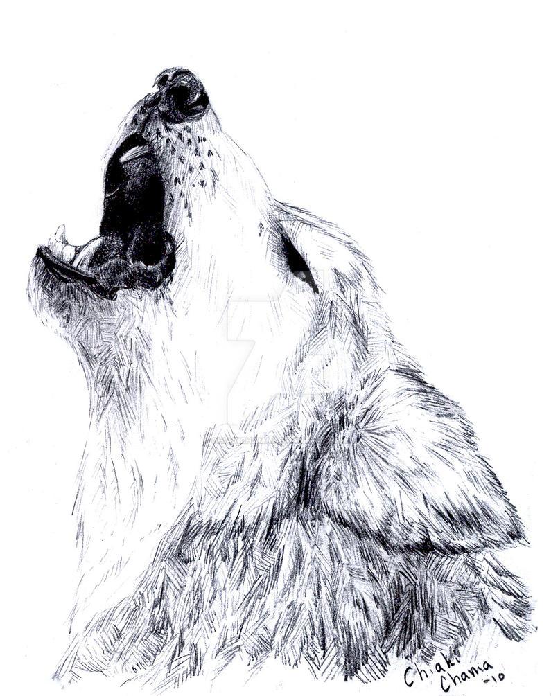 Wolfie :3 by ChiakiChama