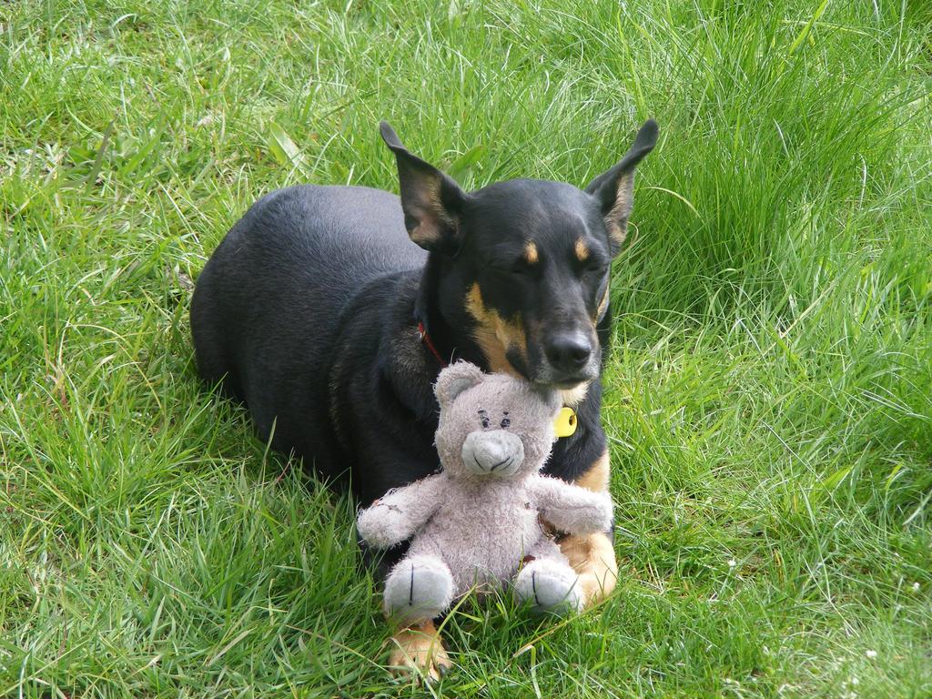 Teddy Bear Dog Girl Names