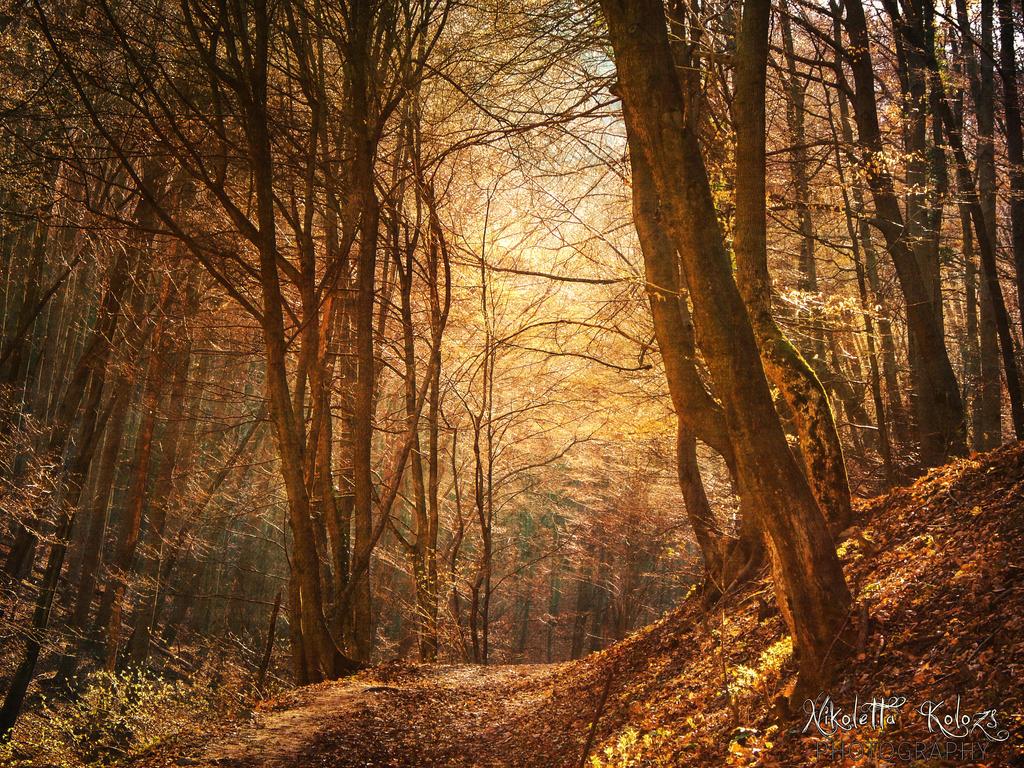 woodsy by Nikoletta-Kolozs
