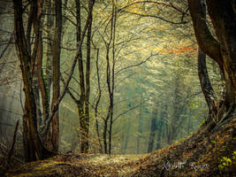 light forest by Nikoletta-Kolozs
