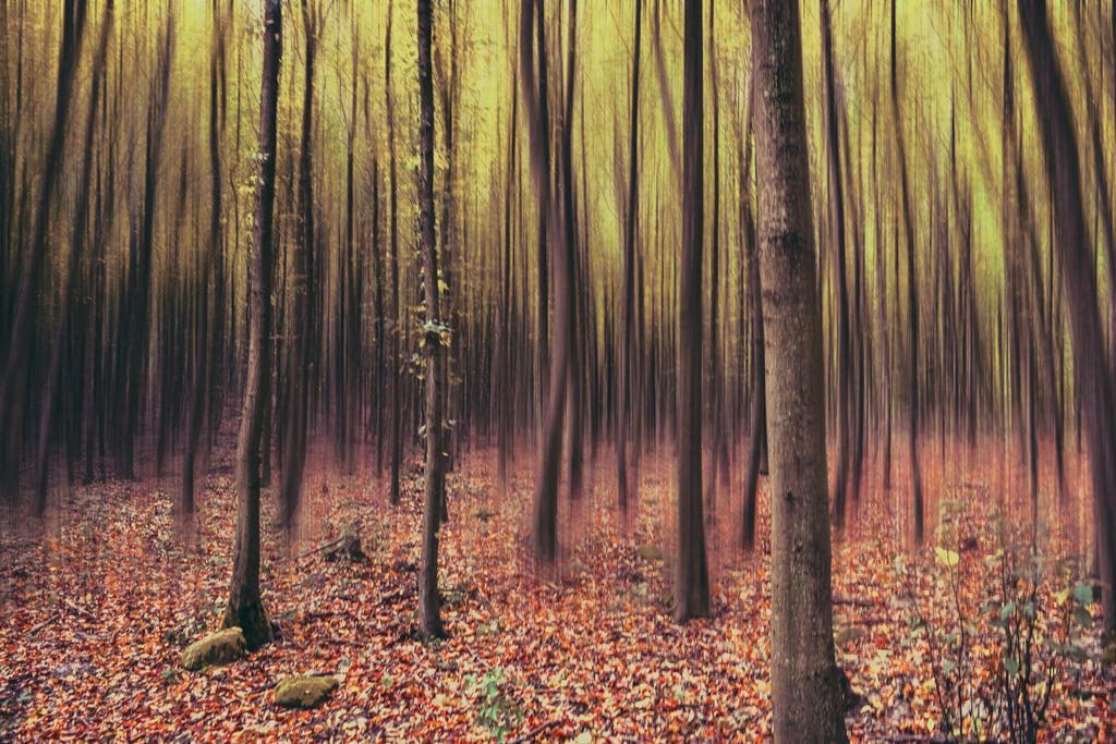in the enchanted forest by Nikoletta-Kolozs