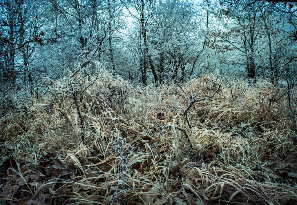 Untitled by Nikoletta-Kolozs