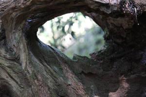 Hole in tree stock by xxMysteryStockxx