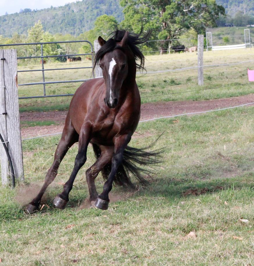 Dark horse stock 32 by xxMysteryStockxx