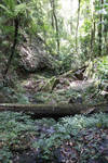 Forest background stock 1