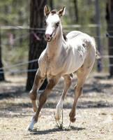 foal stock 14 by xxMysteryStockxx