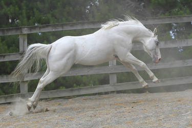 White stallion lunge/jump by xxMysteryStockxx